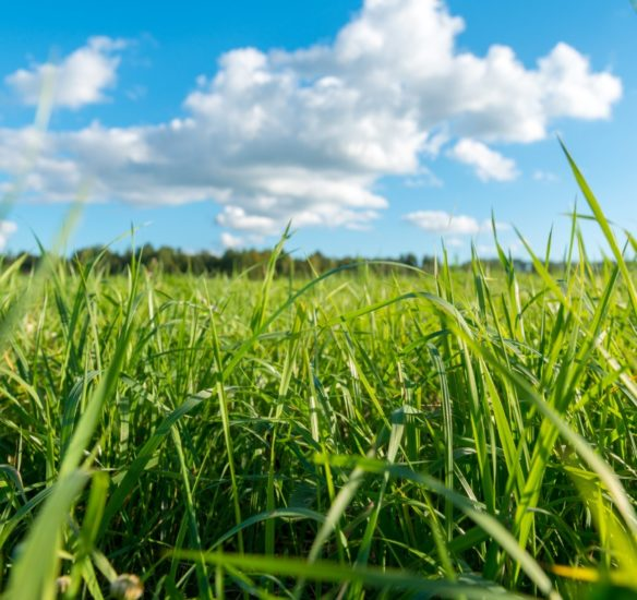 Green grass and white clouds - environmental protection concept